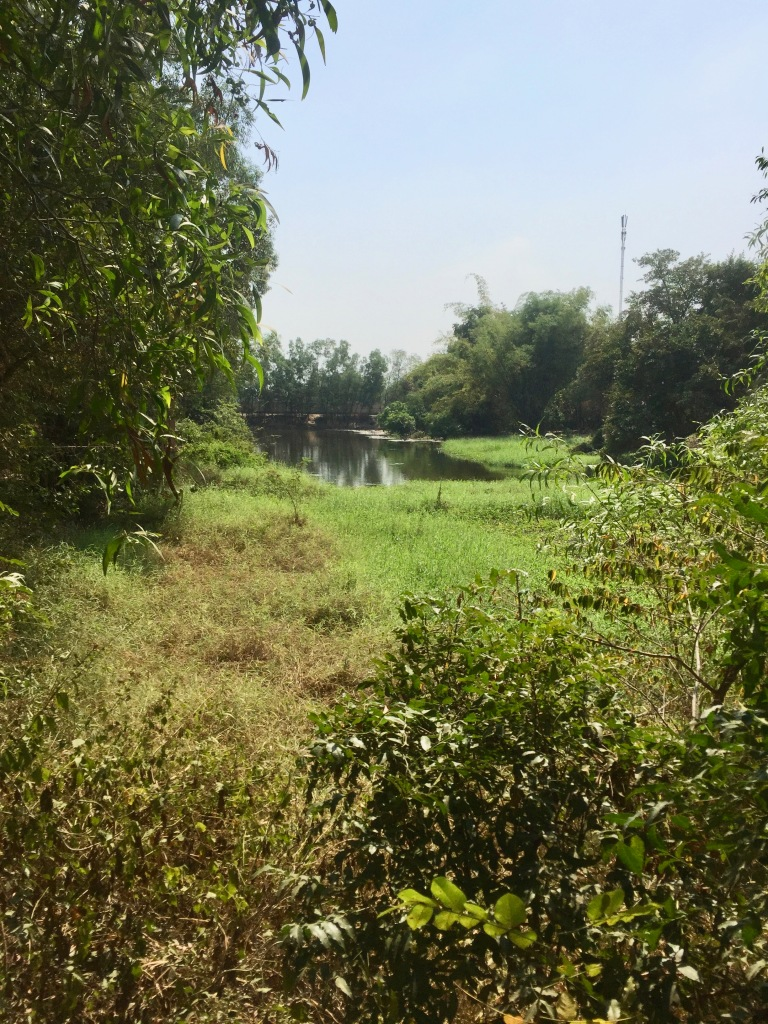 Greenery at Choeung Ek Killing Field.